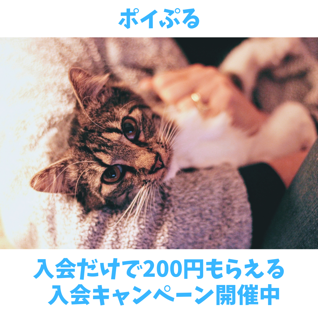ポイぷる 短期だけど入会で200円もらえるチャンス!